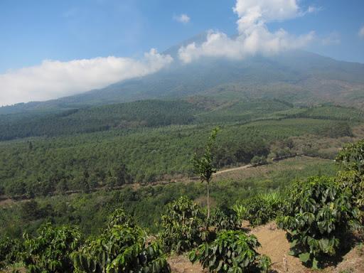 グアテマラ サンセバスチャン農園関連記事最新記事カテゴリーメニュー